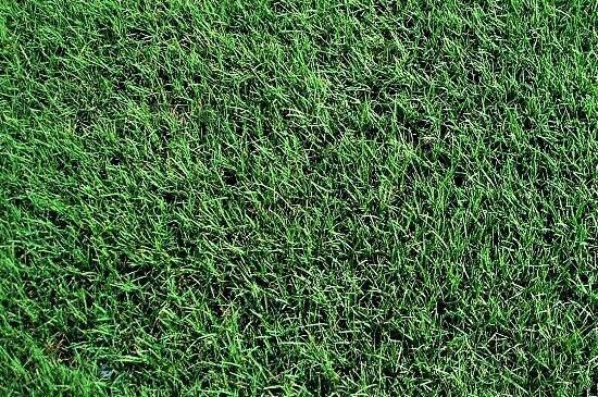 Tifway 419 Bermuda Grass Sod in Louisiana