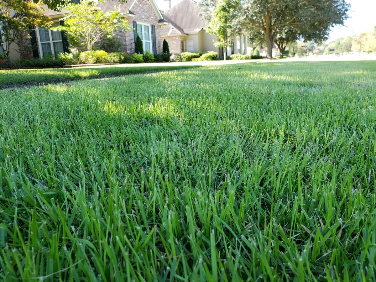 Lafayette Sod - sod for sale, delivery, and sod installation - Zoysia grass sod